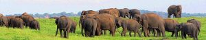 Great Elephant Gathering at Kaudulla National Park